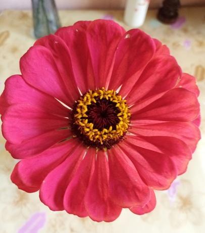 cvetochnaya-korzinka